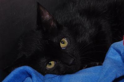 Black cat, big eyes.