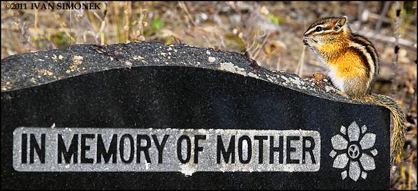 """NATURAL DECORATION"",Telegraph Creek cemetery,B.C.,Canada."