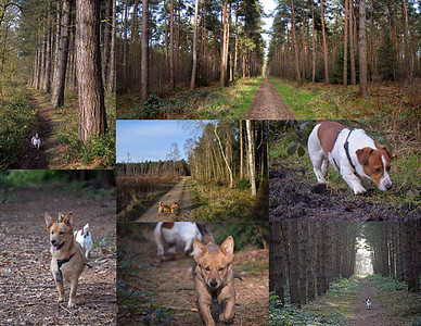 STAPLEFORD WOODS DOG WALK (5)