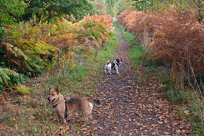 STAPLEFORD WOODS DOG WALK