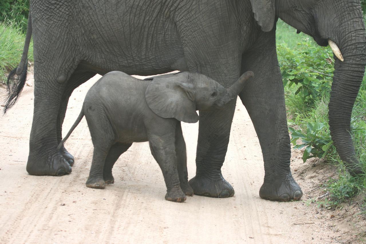 Baby ellie with mum!