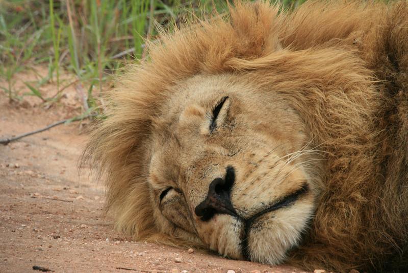 Now he sleeps!!