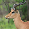 Sabi Sands/Kruger National Park - Best Of! :