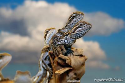 sacramento  reptile  expo  2007