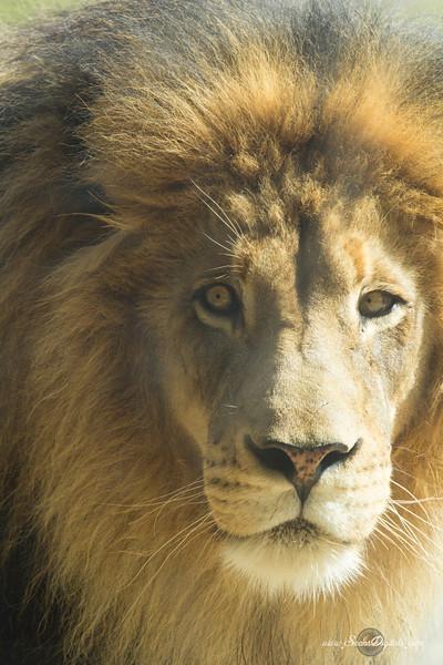 IMAGE: http://www.seansdigitals.com/Animals/Safari-Park/i-DRxgrXX/0/L/SP-3-L.jpg
