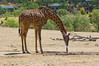 Safari West - the spirit of Africa in the Wine Country