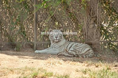 Safari Zoological Park Caney