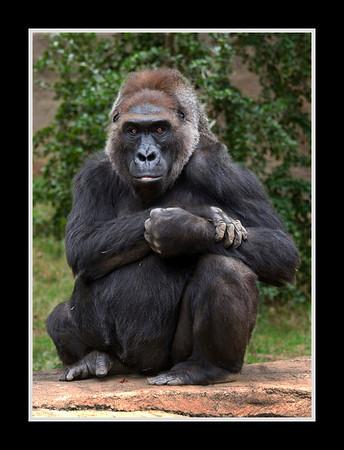 San Diego Wild Animal Park and Zoo