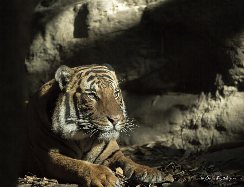 IMAGE: http://www.seansdigitals.com/Animals/San-Diego-Zoo-2/i-ggwsC5j/0/L/Zoo3-22-L.jpg