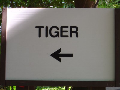 I don't see any tiger