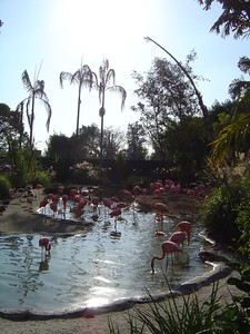 The Flamingo Pool