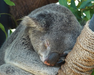 Sleeping Kaula