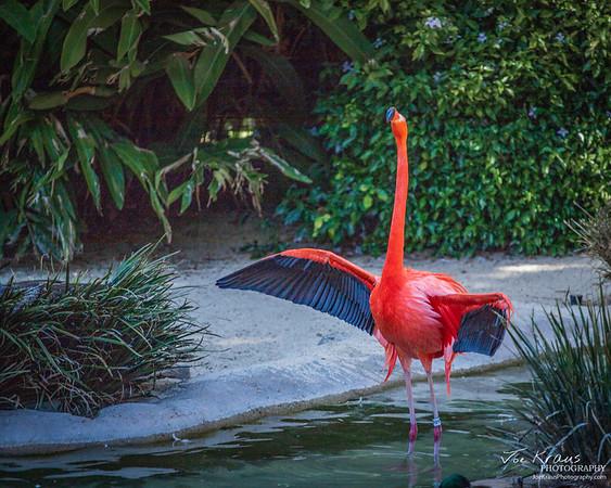 Angry Flamingo