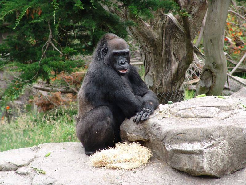 SF Zoo 2004 023