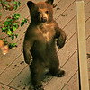 Cub on front deck standing to get better view of photographer above him on balcony.