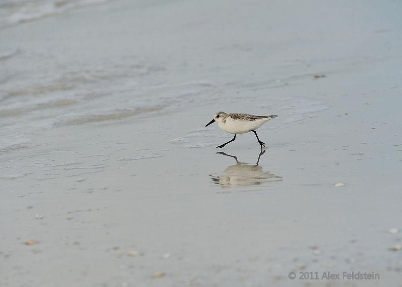 Sanderling - Bal Harbour, Florida