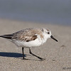 Sanderling - Bal Harbour, Florida