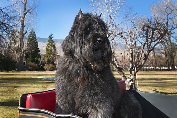 Sandford Dogs