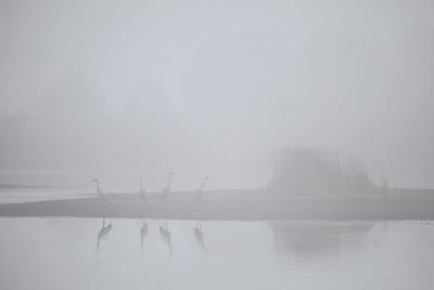 """SANDHILL CRANES 7777  """"Sandhill Cranes in early morning fog at Crex Meadows""""  Crex Meadows Wildlife Area - Grantsburg, Wisconsin"""