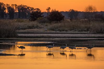 """SANDHILL CRANES 02644  """"A sublime morning at Crex Meadows""""  Crex Meadows Wildlife Area - Grantsburg, Wisconsin"""