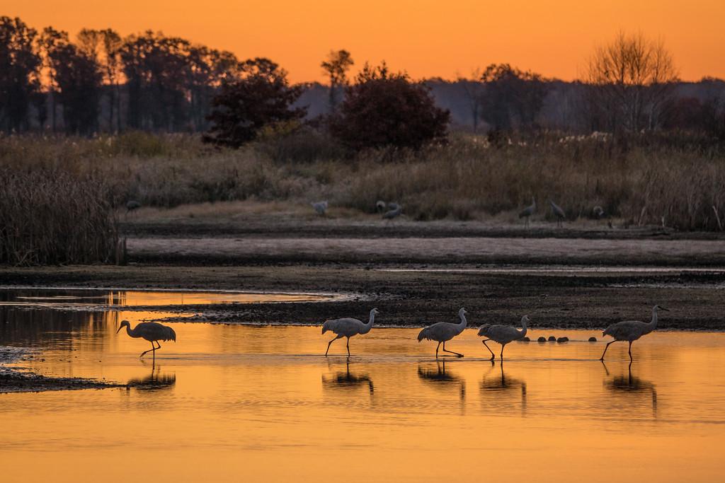 """SANDHILL CRANES 02644<br /> <br /> """"A sublime morning at Crex Meadows""""<br /> <br /> Crex Meadows Wildlife Area - Grantsburg, Wisconsin"""