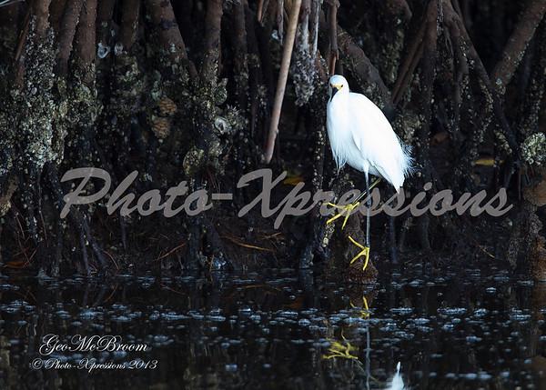 snowy egret-print_4636