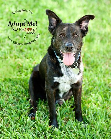 Saving Pets Lives --- Bob