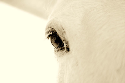 Bonita  Mustang Rachael Waller Photography 2009