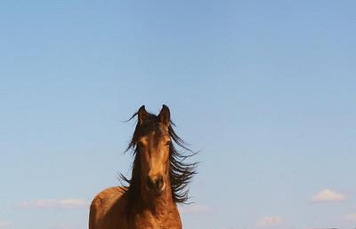 Cielo I Rachael Waller Photography 2009
