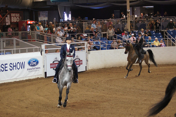 Scottsdale Arabian Horse show 2013