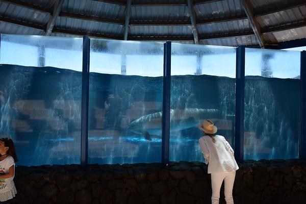Sea Life Park Hawaii 5-28-17
