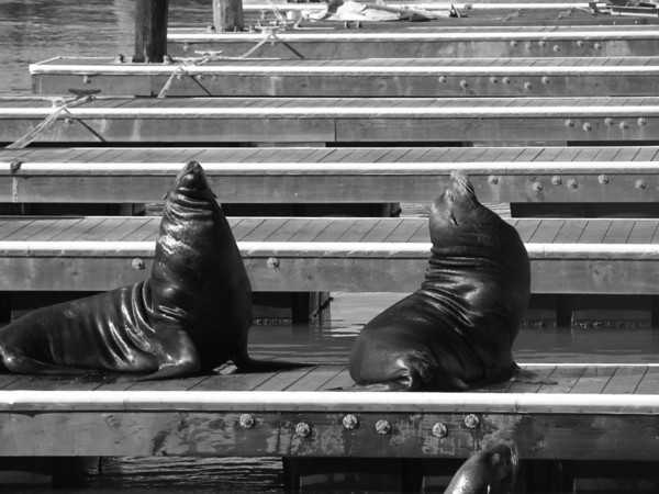 Sunning, Pier 39 in San Francisco Fisherman's Warf