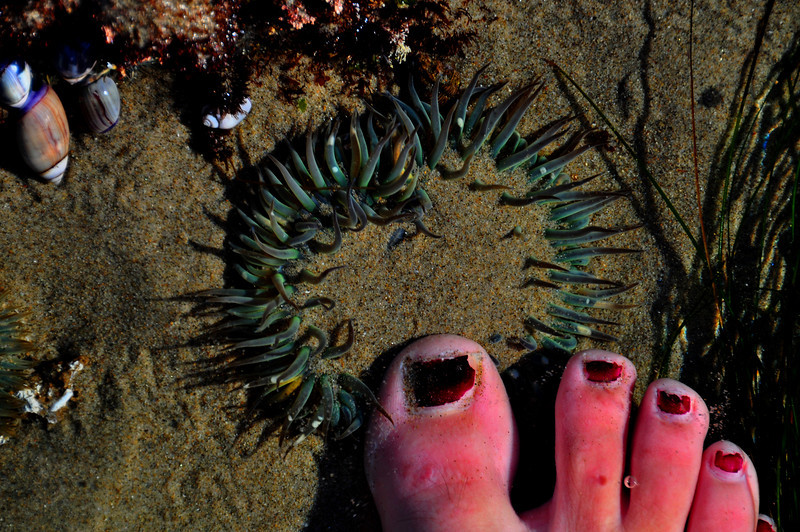 Terrible Pedicure - Point Dume, CA