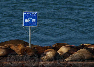 """Work Dock"" California Coast"