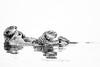 Sea Otters Elkhorn Slough-6492