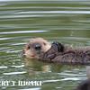 sea otter-168