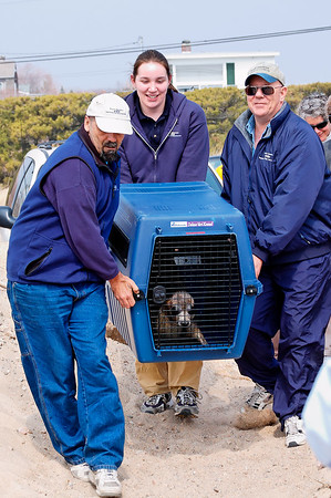 Seal Release 2006