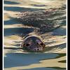 Gweek Seal