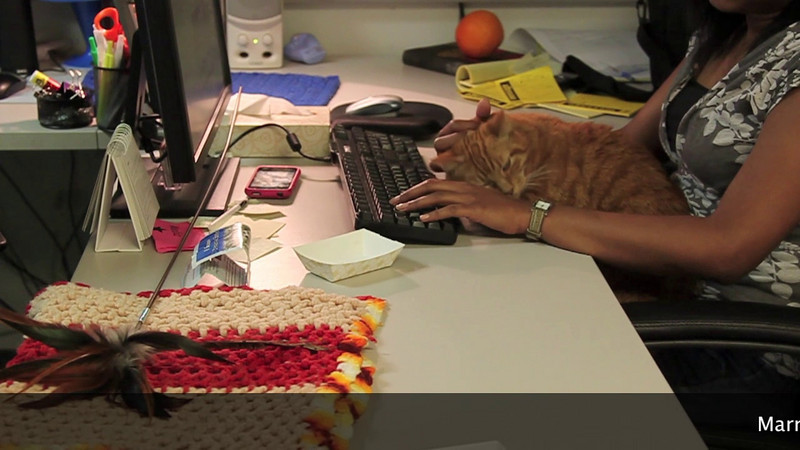 Marmalade, a -12-year-old orange tabby office foster. Adopted!