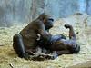 Seattle Woodland Zoo<br /> <br />  - Siblings ?
