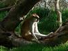 Seattle Woodland Zoo<br /> <br />  - Laz-z-boy