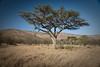 Quintessential Serengeti. Grass, accacias-although usually no ridges.