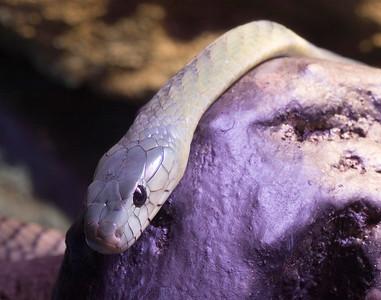 Serpentarium 1/20/2007