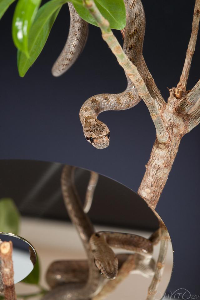 Snake over a Harddisk