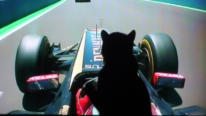Shadow cat LOVES Formula One