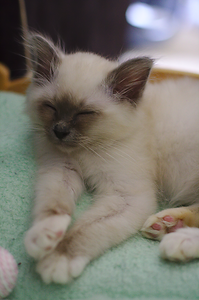 Sleepy Mousse