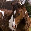 Sheila Hautamaki's Horses