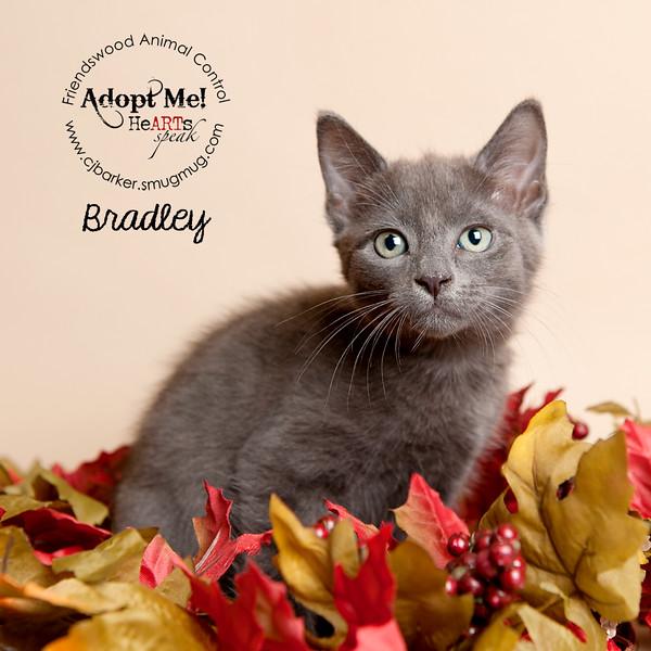 Bradley_13177