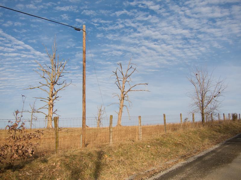 Red-headed Woodpecker habitat<br /> Badger Rd, Augusta Co., 12-31-10