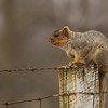 Squirrel standing sentry near bird feeders<br /> Fairview Rd, Mt. Crawford 3-23-14